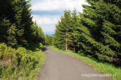 ostatnia prosta - na szlaku czerwonym z Jelenki na Przełęcz Okraj