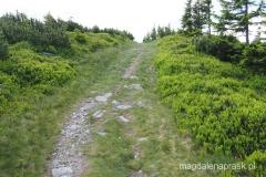 najbardziej stromy odcinek podejścia na Łysocinę