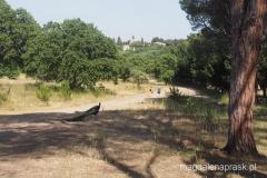 pawie rządzą na wzgórzu Filerimos