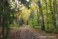 lasy Szwajcarii Chodzieskiej