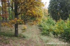 złot polska jesień