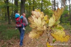 na szlaku, piękna jesienna aura