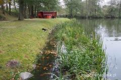 kot czai się na żaby, z za nim suna z widokiem na jezioro