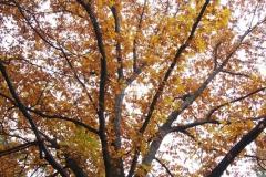 piekne jesienne drzewo