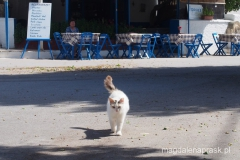 prawdziwa Grecja - jeden ze słynnych rodyjskich kotów