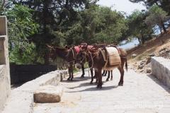 górna stacja osiołków (pod bramą Akropolu)_