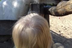 z wizytą w stadninie koni