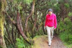 okolica porośnięta jest przez piękny i bardzo stary las