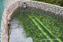 na terenie hodowli pstrągów - małe rybki pływają w basenie