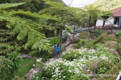 piękna roślinność na terenie hodowli pstrągów w Ribeiro Frio