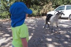 spotkanie z kozami