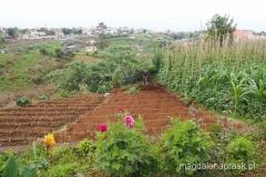 rolnik pracujący w polu - tradycyjne rolnictwo na Maderze