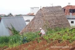 tradycyjne rolnictwo na Maderze