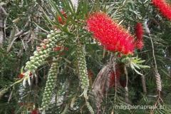 piękna egzotyczna roślinność