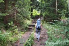 na żółtym szlaku w drodze na szczyt Szczelińca
