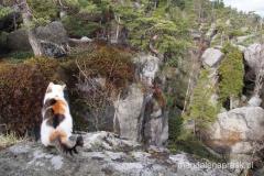 kot razem z nami podziwia widoki