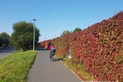 droga rowerowa wzdłuż ul. Lechickiej