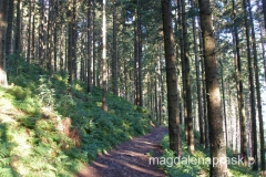 na początek szlak wiedzie przez piękny las