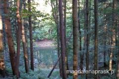 w lesie ukryte są urokliwe jeziorka
