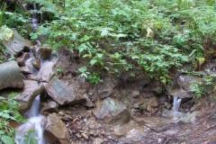 czasami z lasy na ścieżkę wypływają małe strumyki