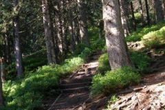 idę przez las...
