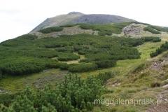 w oddali szczyt Babiej Góry