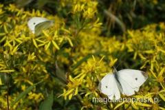 i...i flory (m.in. kolorowe motyle w dużych ilościach)