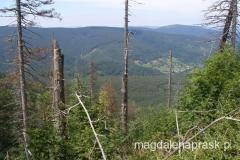 po drodze las częściowo jest zniszczony