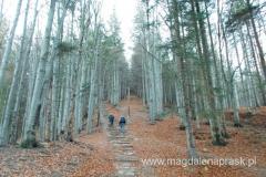 leśną drogą dojściową do schroniska Markowe Szczawiny