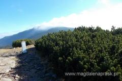 na szczycie Mała Babia Góra (1.517m npm); widok na Babią Górę