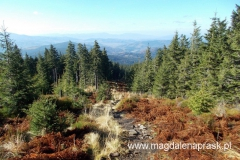 schodzimy z Małej Babiej Góry - coraz więcej jesiennych kolorów