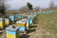 okolice to rejon ekologiczny - dobry do produkcji miodu