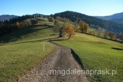 łagodne wzgórza Beskidu Śląskiego w okolicy Wisły