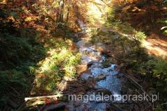 szlak na Baranią Górę wiedzie wzdłuż potoku Białej Wisełki