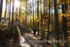przez jesienny las...