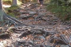 na niebieskim szlaku w drodze na Baranią Górę