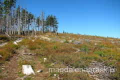 całe stoki pozbawione są lasu