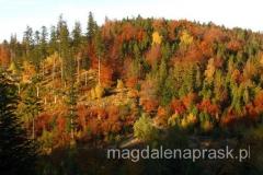 piękny jesienny las na zboczach Beskidka