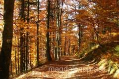 jesienią las jest piękny - na zejściu do Brennej