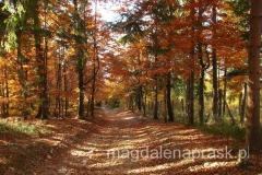 jesienią las jest piękny