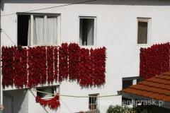 warkocze z czerwonej papryki suszą się w słońcu