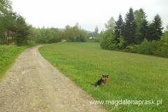 tutejszy pies - strażnik drogi do Jamnej