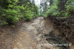 droga prowadząca z Bukowca do wsi Jamna