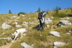 idziemy na Dinarę w kolejności: Zdravko, biały pies, ja i peleton zamyka brązowy pies