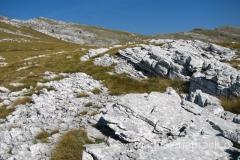 szlak prowadzi przez białe, wapienne wystające skałki