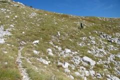 nasza grupa: Zdravko, brązowy pies i biały pies... jeden za drugim przez całą drogę