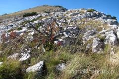 ta część Gór Dunarskich jest bardzo sucha - brakuje tu wody, mało tu roślinek, za to dużo uschniętych gałęzi kosodrzewiny