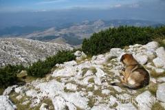 brązowy pies podziwia widoki w stronę Bośni i Hercegowiny
