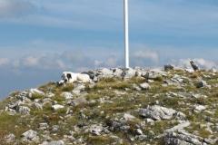 psia drużyna odpoczywa na szczycie