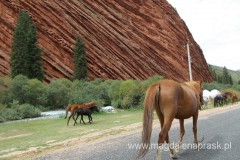 konie w Kirgistanie są bardzo ważne i już najmniejsze dzieci umieją na nich jeździć